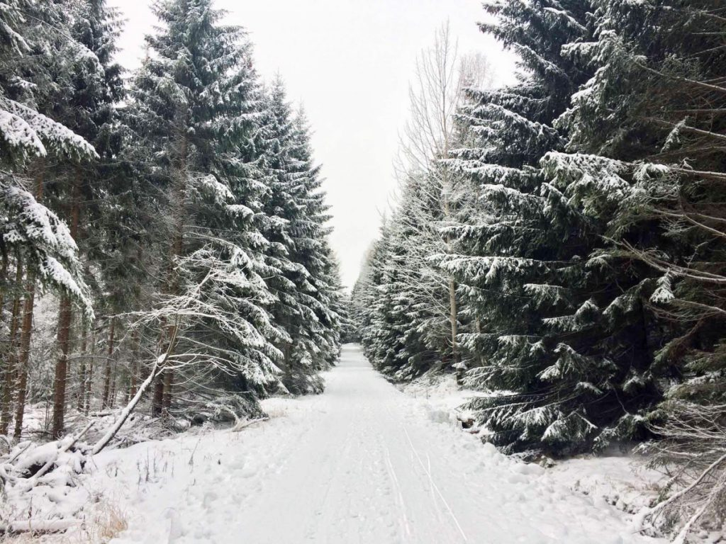 Schneespaziergang_Allee
