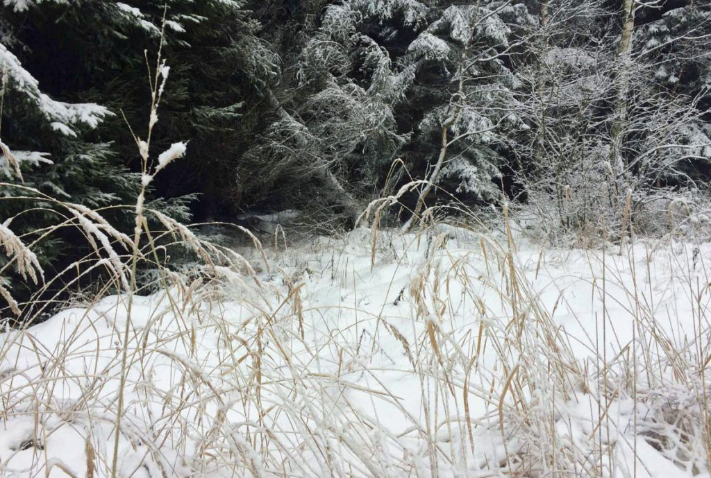Schneespaziergang_Gräser